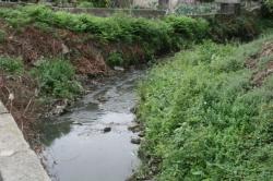 Teixeira Lopes denunciou a falta de despoluição da Ribeira da Granja